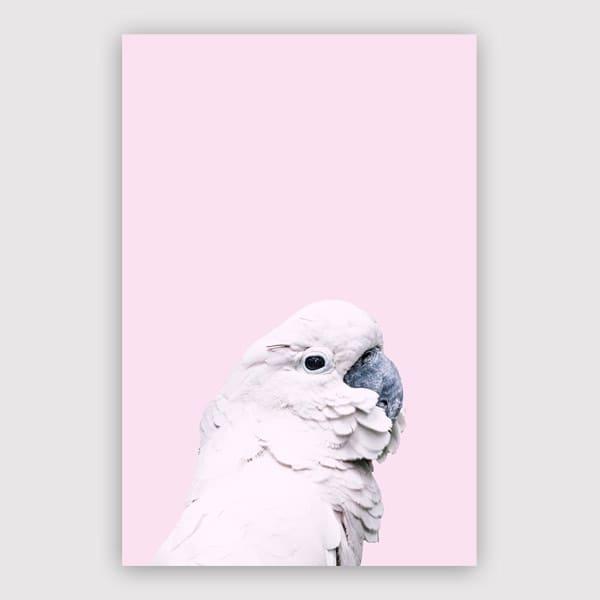 Victoria Frost - Pink Cockatoo