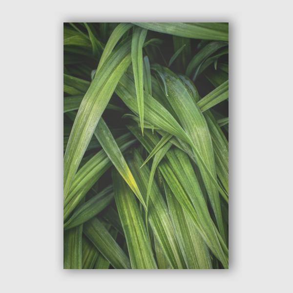 Nur Mut - Long Leaves 1